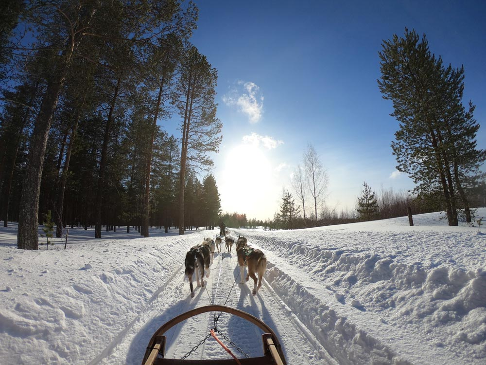 dogs sled 2