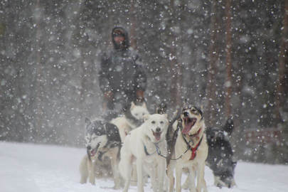 Dog Sledding in Boulder