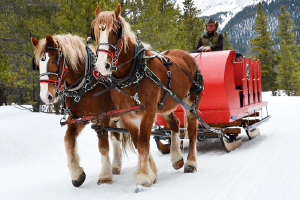 Sleigh Rides in Winter Park